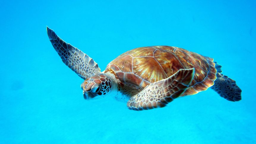luxury hotels in barbados the lone star hotel turtles in Barbados